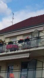 Vente appartement Chevigny-Saint-Sauveur 21800 - Photo miniature 4